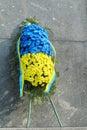 Flower colors of Ukrainian national flag