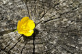 Flower in the cracks tiny yellow between of a tree trunk Royalty Free Stock Photo