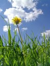 Flower dandelion in clouds Stock Photography