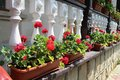 Flower decorated terrace of a house at moldova Royalty Free Stock Photography