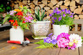 Flower decoration on terrace Royalty Free Stock Photo