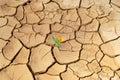 Kvetina v púšť