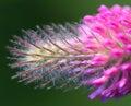 Flor abejas