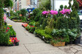Flower district flowers and plants for sale on th street the center of new york city s Royalty Free Stock Images