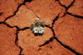 Flower in drought Royalty Free Stock Photo