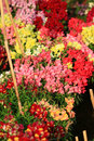 Flower exhibition beautiful shot of colored flowers in Stock Image