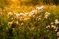 Flower field under the morning sunlight grass and Stock Photo