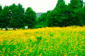 Flower filed in paju city korea a field the cultural town of heyri art village south it s located near the dmz Royalty Free Stock Photo