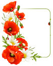 Flower frame 8. Poppy and Camomile Royalty Free Stock Photo