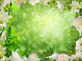 Flower frame the beautiful green garden background for your art Royalty Free Stock Image