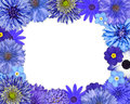 Flower frame blue purple flowers isolated white background daisy chrysanthemum cornflower dahlia iberis primrose Stock Photos