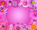 Flower Frame Pink, Purple Flowers Royalty Free Stock Image