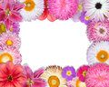 Flower frame pink purple red flowers isolated white background selection nine periwinkle rose cornflower lily daisy chrysanthemum Stock Image