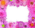 Flower frame pink purple red flowers isolated white background selection nine periwinkle rose cornflower lily daisy chrysanthemum Royalty Free Stock Image