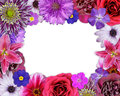 Flower frame pink purple red flowers isolated white background selection nine periwinkle rose cornflower lily daisy chrysanthemum Stock Photos