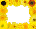 Flower frame selection yellow flowers isolated white background set daisy gerber marigold osteospermum chrysanthemum strawflower Stock Photos