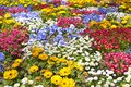 Flower garden beautiful and colorful in spring Royalty Free Stock Images