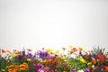 Flower garden. Royalty Free Stock Photo