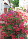 Flower garden - beauty in nature Stock Photos
