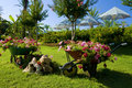 Flower garden with carts Royalty Free Stock Photo