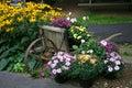 Flower Garden Display with Wheelbarrow Royalty Free Stock Photos
