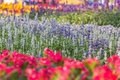 Flower garden on evening time at khonkaen thailand Royalty Free Stock Images