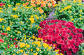 Flower garden multicolored flowerbed on a lawn Stock Photos