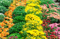 Flower garden multicolored flowerbed on a lawn Royalty Free Stock Photos