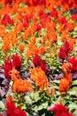 Flower Garden Nature Background
