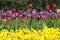 Flower Garden With Tulip