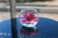 Flower in a glass vase Royalty Free Stock Photo