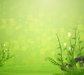 Flower and grass spring with water drop on green background Royalty Free Stock Photo