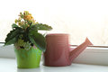 Flower in a green pot and  watering can Royalty Free Stock Photo