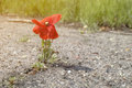 Flower growing on the asphalt road Royalty Free Stock Photo