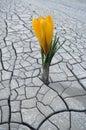 Flor en país