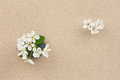 Flower growing out of stone and sand concept Stock Photo
