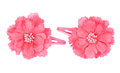 A flower hair clip Royalty Free Stock Photo