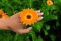 Flower on Hand Stock Photography