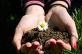 Flower in hand with earth agriculture nature flowers Royalty Free Stock Photos