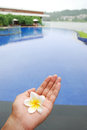 Flower on the hand with swimming pool in background summer holiday vacation Stock Image