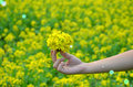 Flower on hand yellow in with sunlight garden field isolate vintage style blur background Royalty Free Stock Photography