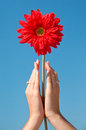 Flower in hands Royalty Free Stock Photos