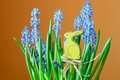 Flower with a hare blue flowers and green leaves and yellow Stock Image