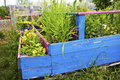 Flower and herb garden in a wooden box Royalty Free Stock Photo