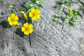 Flower herb on the old wooden background in nature Stock Photo