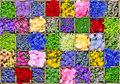 Flower herb and spice collage a colorful created by boxes of flowers herbs spices Royalty Free Stock Image