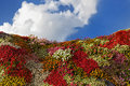 Flower hill multicolored with a cloudy blue sky as background Stock Photo