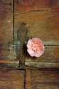 Flower and hinge hollyhock on vintage wooden chest with rusty Stock Image