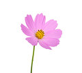 Flower isolated on white background Stock Photography