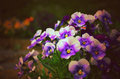 Flower in japan vintage picture with violet Stock Image